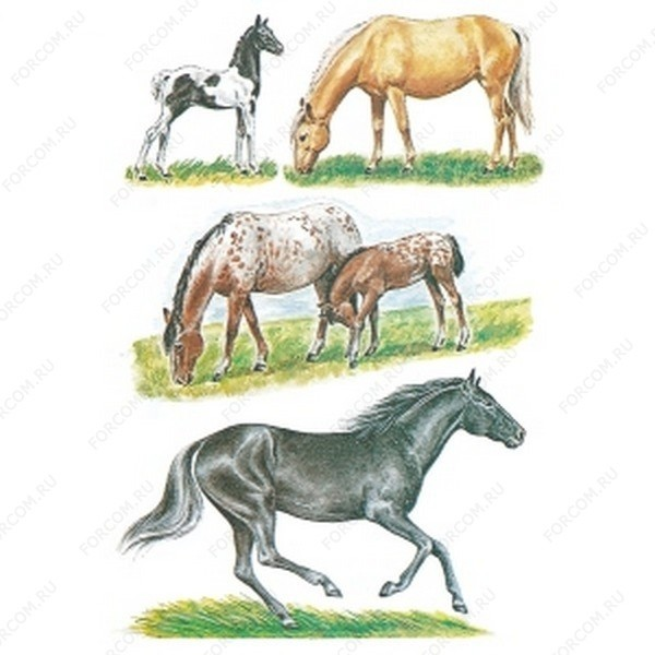HERMA 3806 Decor Наклейки Лошади пасутся (рисунок)
