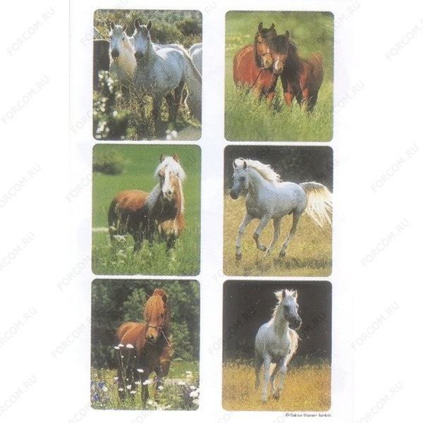 HERMA 5748 Decor Наклейки Лошади на лугу (фото)